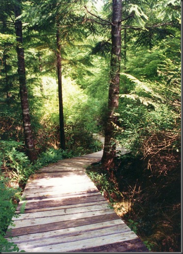 Our old boardwalk at the lake